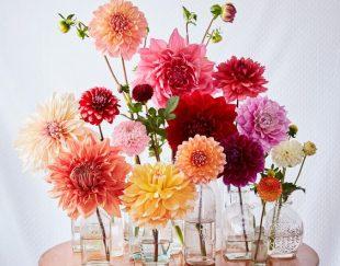 گلفروشی گل باما